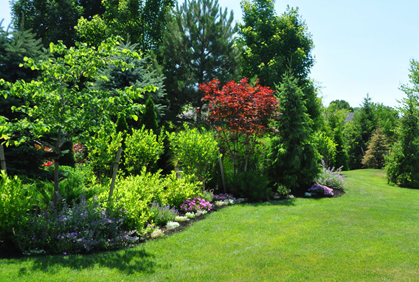 Best Shrubs for Landscaping