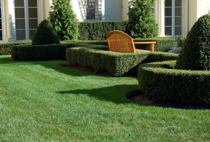 Beautiful Landscaping Shrubs