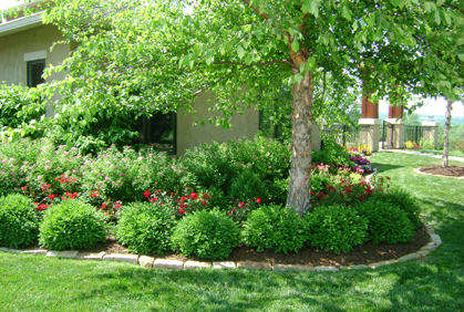 Landscape Around Trees Ideas Front Yards