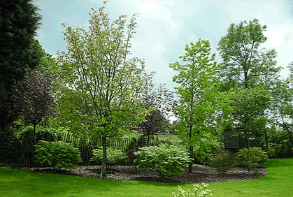 Photo Gallery Trees for Landscaping Designs Plans & Tip on Backyard Landscaping Ideas With Trees id=16436