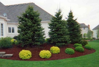 Types of Landscaping Trees