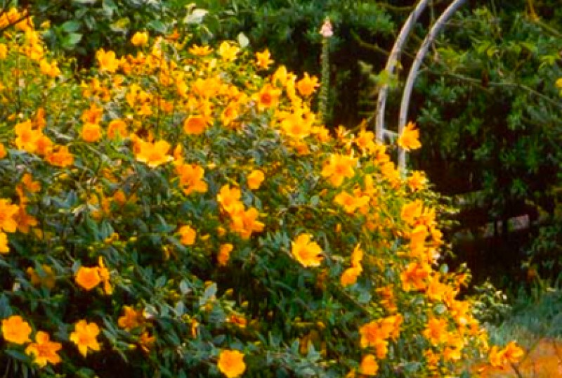 Flowering Shrubs and Trees